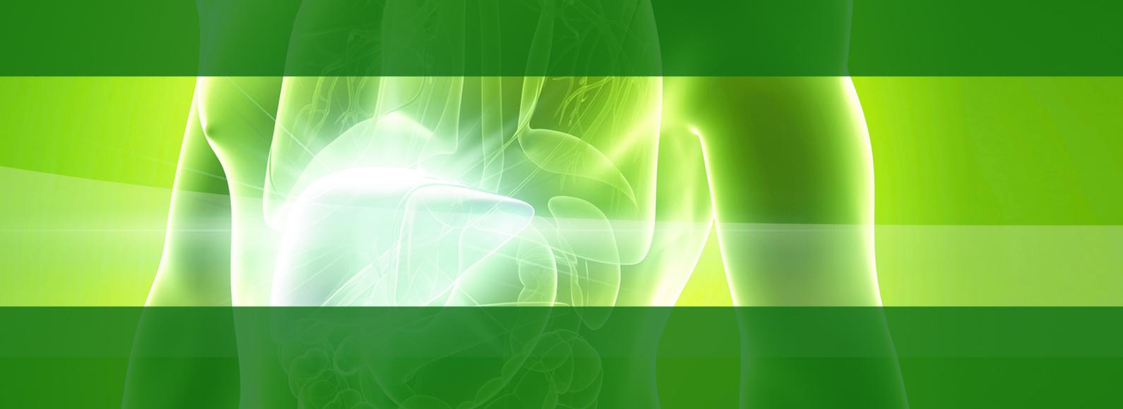liver-slide-back2